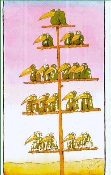Hierarchy bird tree