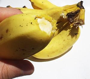 Banana solta do cacho
