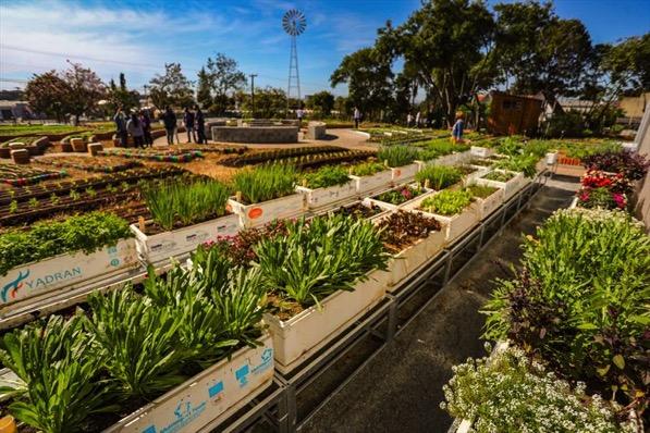 Fazenda urbana em curitiba 7